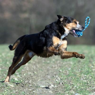 Laboni Toys - Maxi Schleuderball